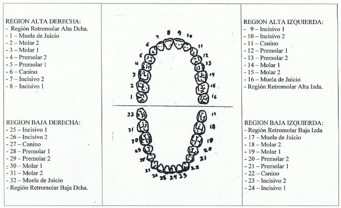 dientes3
