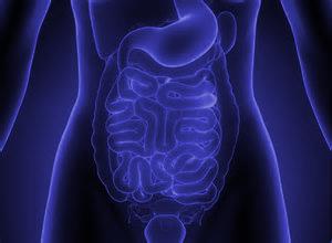 limpieza intestinos